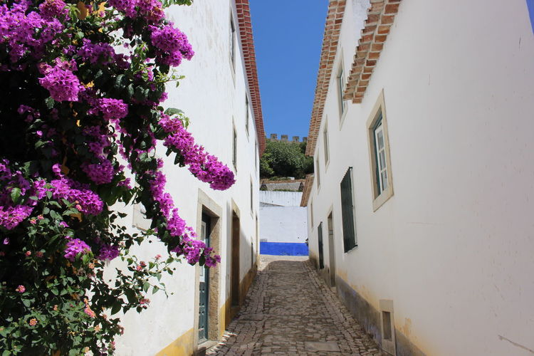 Architecture Building Exterior Built Structure Day Flower Growth Historical Sights Low Angle View Nature No People Outdoors Plant Portugal Staircase Steps Steps And Staircases The Way Forward Tree Turismo Vacations Óbidos