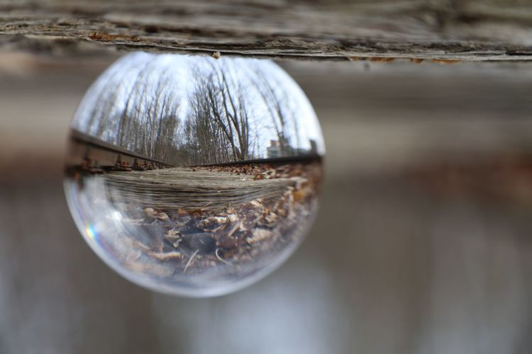 Reflection Close-up Transparent Glass - Material No People Sphere Crystal Ball Selective Focus Day Wood - Material Outdoors Purity