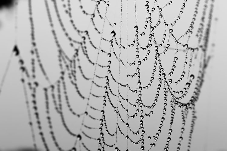 Beauty In Nature Blackandwhite Close-up Complexity Detail Dew Dew Drops Fragility Natural Pattern Nature No People Outdoors Sky Spider Web Spiderweb Tranquility