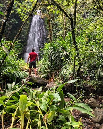 Rear view of man standing against waterfall at forest