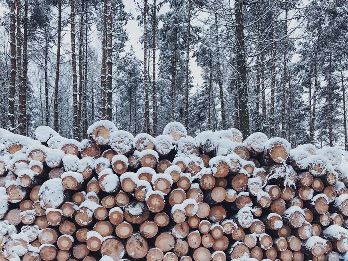 Stack Of Logs In Winter