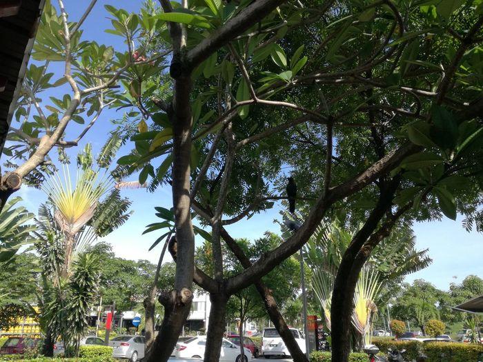 Trees in city