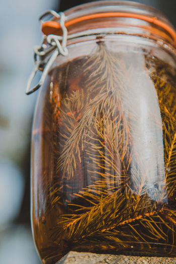 Container Close-up Jar Transparent No People Indoors  Animal Themes Glass - Material Animal Food Food And Drink Focus On Foreground Nature Mason Jar Still Life Plant One Animal Selective Focus Wellbeing Plastic Bag Airtight