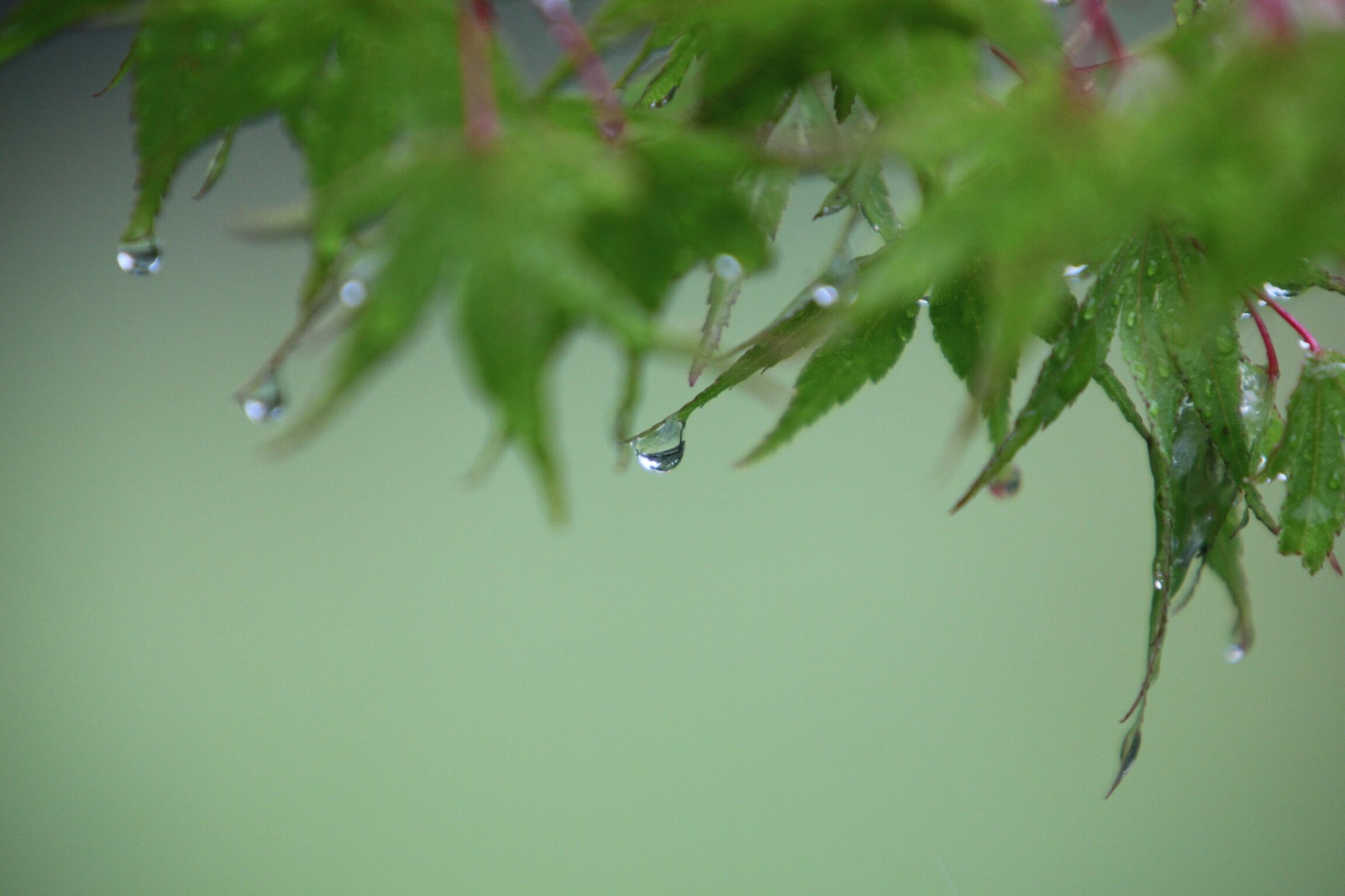 water, drop, leaf, close-up, growth, wet, freshness, green color, nature, plant, beauty in nature, fragility, focus on foreground, dew, selective focus, purity, no people, day, green, raindrop