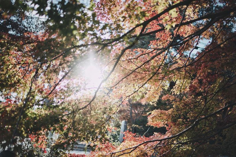 Japanese  Bokeh Snap Streetphotography Japan Nature Tree Plant Beauty In Nature No People Growth Sunlight Nature