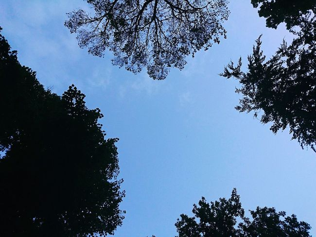 Outdoors Low Angle View Tree And Sky One Evening Still Blue Sky Look Up The Sky On A Bench Park And Lake Can You Imagine? Smartphonephotography My Favorite Scene GoethePark Cottbus Germany