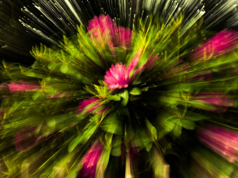 Abstract Blur Blurred Motion Blurry Flower Flowers Nature Zoom Blur Zoom Blurred Zoom Burst