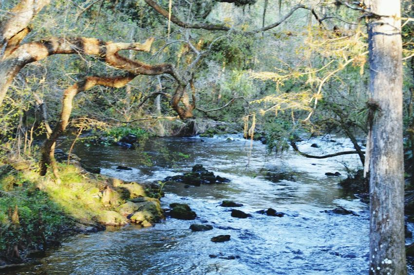Scenery Landscape Trees Nature River Rapids Trees Outdoors