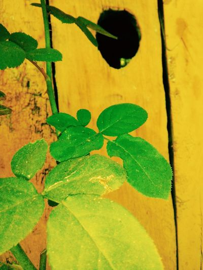 Yellow Urban Gardening Yellow Green Green Green!