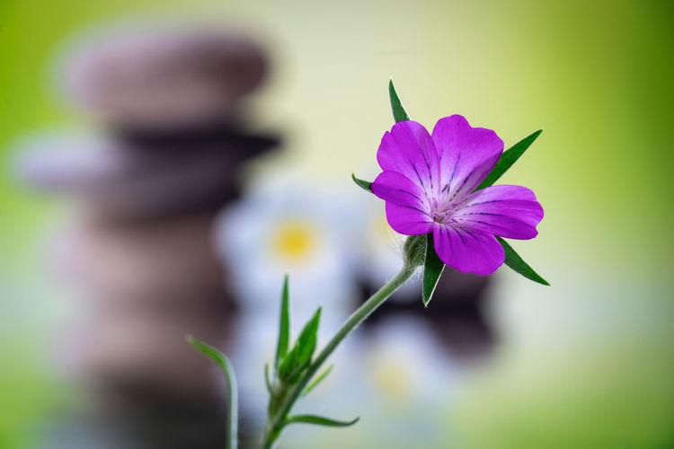 Zen Wild Flower