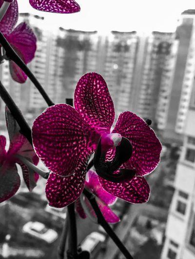 Орхидея. Flower