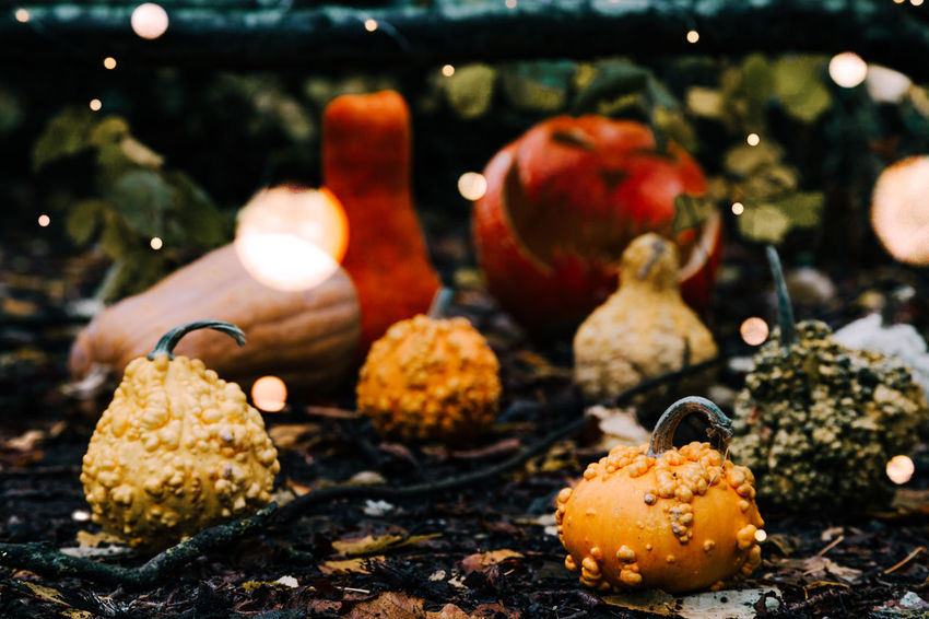 Close-up Day Decoration Focus On Foreground Food Food And Drink Freshness Fruit Fungus Healthy Eating Illuminated Mushroom Nature No People Outdoors Selective Focus Still Life Table Vegetable Wellbeing