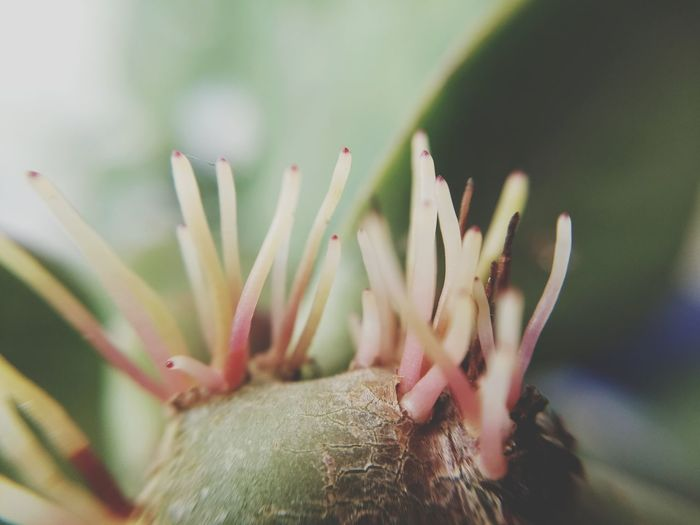 Coming up VSCO Lima,Perú EyeEm Selects Cactus Close-up Plant Succulent Plant Botanical Garden Blooming Aloe A New Beginning