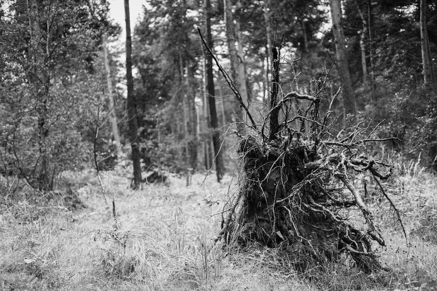 Blackandwhite Photography Bäume Forest No People No Person Trees Wald Weed Wood Wurzel