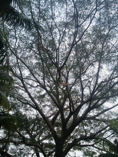 Creative Light And Shadow Tree Nature Freedom Leaves Branches El Salvador