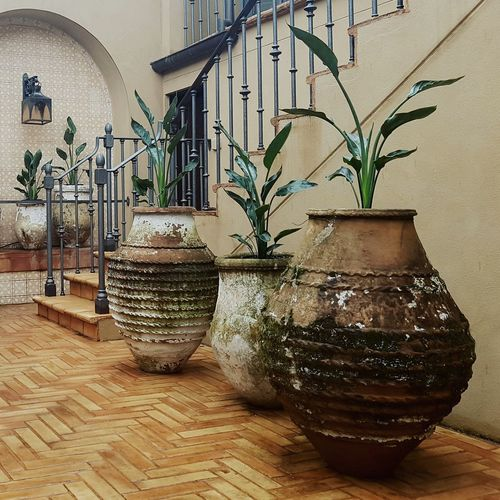 Plant Nature Leaf Outdoors Plants Strelitzia Stairs Staircase Reginae Spanish Arquitecture Spanish Colonial Spanish Colonial Urn Urns Container Gardening Garden Garden Architecture Garden Decor Garden Design Design Samsung Galaxy S7 Samsung S7