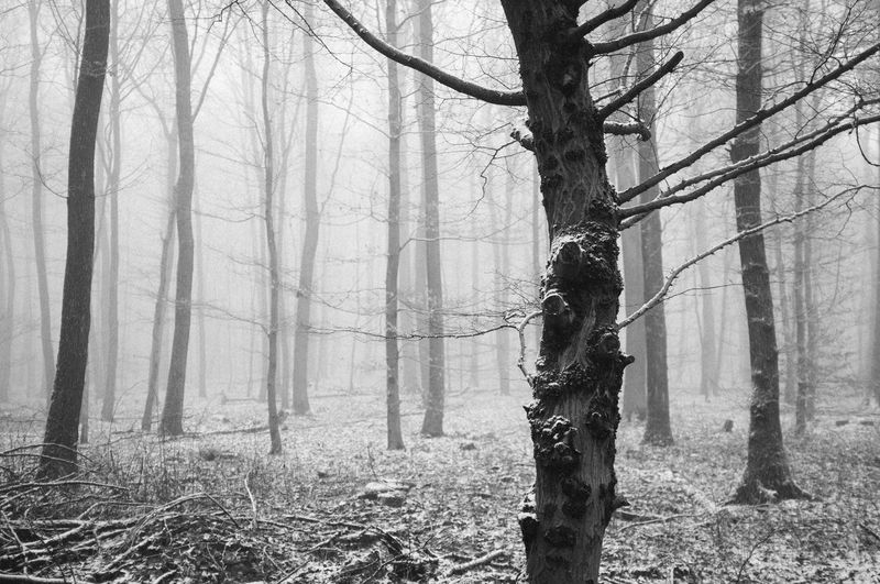 The fog and the woods. Wallacianism Winter Atmospheric Mood Beauty In Nature Blackandwhite Branch Day Fog Foggy Forest Mist Nature No People Outdoors Tree Tree Trunk Wilderness Area WoodLand Woods