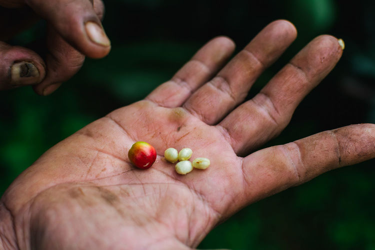 Fresh organic coffee beans on hand. Organic coffee beans. Adult Close-up Day Human Body Part Human Hand One Man Only One Person Outdoors People Seed Fresh On Market 2016