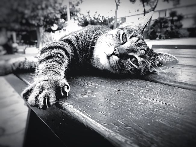 Good Time 💦🐟🙈🙊🐨🦁 Looking At Camera Blackandwhite Black And White Black & White Blackandwhite Photography Black And White Photography Black&white Blackandwhitephotography Cat Animal Pet Animal Photography Animal_collection Sleeping Table Photooftheday Hollidays Relaxing Rest Calm Look