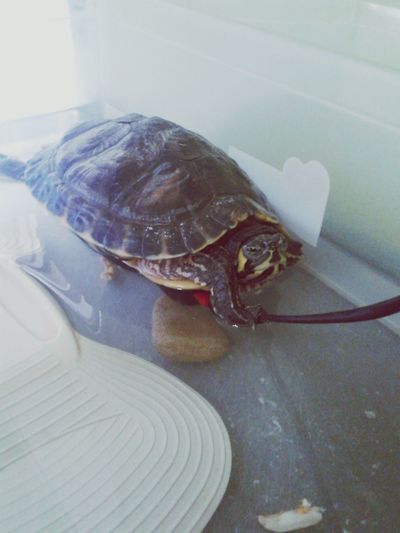 EyeEm Animal Lover FUNNY ANIMALS Turtle Cuteness I ♥ Turtles