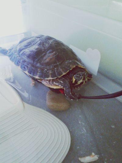 EyeEm Animal Lover FUNNY ANIMALS Turtle Cuteness I ♥ Turtles