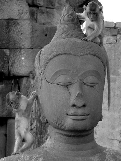 Crop  of an Earlier Buddha Post Monochrome Black & White Awareness
