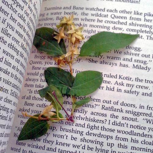 Flowers Herbarium Flowerporn