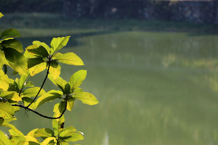 Close-Up Of Plant Against Lake On Sunny Day
