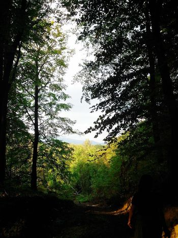 The heart of the forest ♥ Nature Relaxing Hello World Beauty Of The Scenery Wonderland Leafs Forest TimeForMyself Walking Check This Out