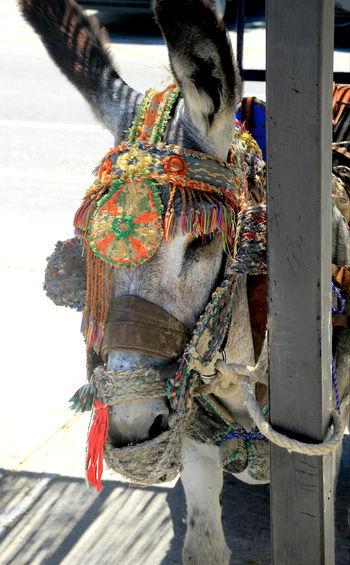 Mijas Pueblo Mijas Mijasforever Streetphotography Streetphoto Donkeys Donkey Taking Photos Scenery Shots Scenery