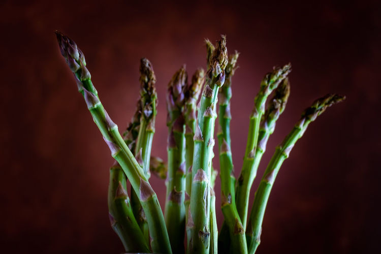 Raw freshly picked Asparagus Asparagus Beauty In Nature Black Background Close-up Colored Background Focus On Foreground Food Food And Drink Food Photography Foodphotography Freshness Green Color Growth Healthy Eating Healthy Food Indoors  Nature No People Organic Plant Plant Stem Purple Season  Studio Shot Tasty Vegetable Wellbeing