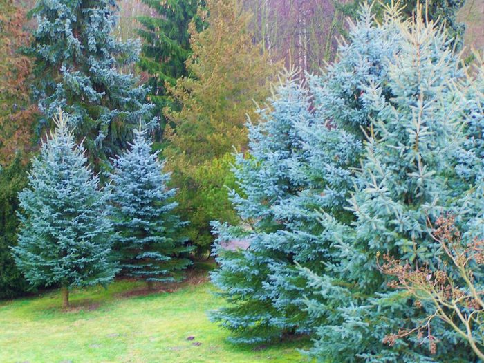 Frühling im Winter 03.02.16 Belgern Day Forest Fühling Im Winter Natur Blumen Wald Gras Moss Nature Relaxing Moments