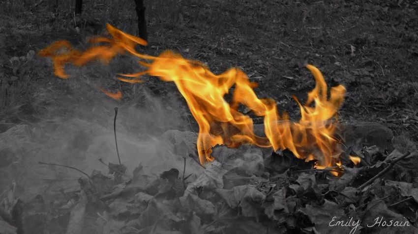 🔥🔥🔥 Fire Flames Black And White Focused Color Hot Burning Wood