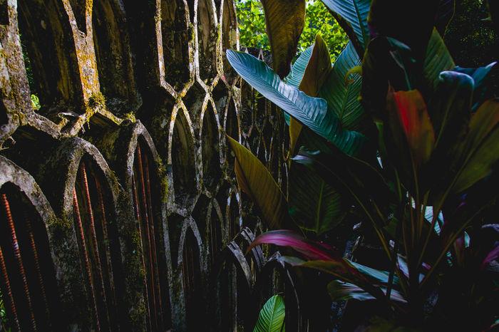 Las Pozas (The Pools) Surrealist botanical garden at Xilitla, San Luis Potosí, México. High Contrast edition. Architecture Castle Edward James's Garden Huasteca Mexico Nature Plants Pools  San Luis Potosí Tranquility Vacations Abstract Amazing Background Beauty Botanical Concrete Contrast House Jungle Pozas Surrealism Tourism Waterfall Xilitla