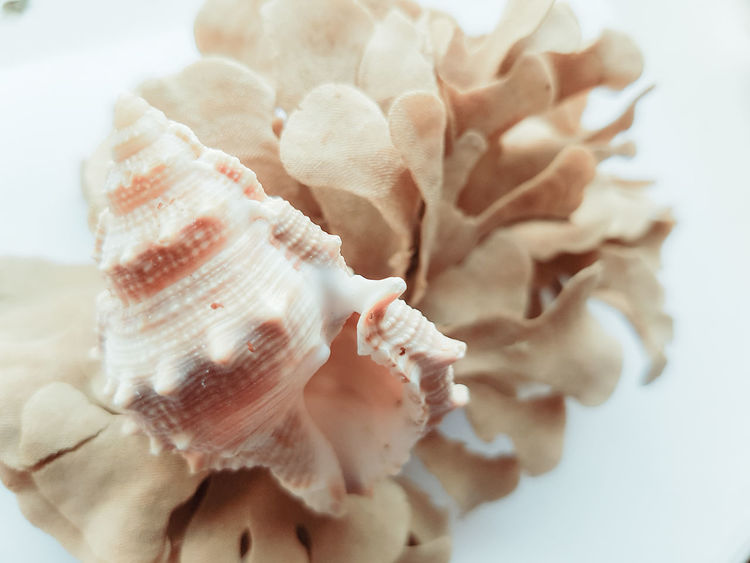 Seashells & seaweed on a white background. Close-up No People Samsung Galaxy S7 Edge EyeEmNewHere Naturelovers Shell Art Natural Beauty! Shell Photography Beachlife Seashell Collection Artistic Seaside Holiday Memories Souvenirs Seashell Shell Collection Beach Day Beach Life Nature_collection Nature_perfection Nature Photography Natural Beauty White Background Shell Sea Side