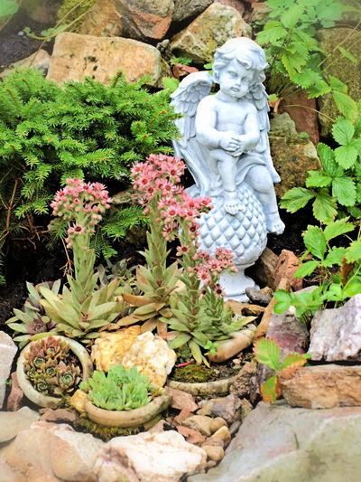 EyeEmNewHere Garten Pflanze Natur Gartendekoration Day Engel Statuen Flower Growth Human Representation Male Likeness Nature No People Outdoors Plant Sculpture Statue