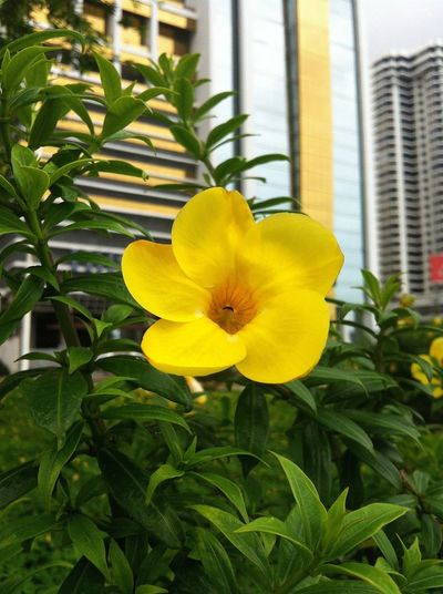 EyeEm Panama Meetup 3 Streetphotography Flowers IPhoneography