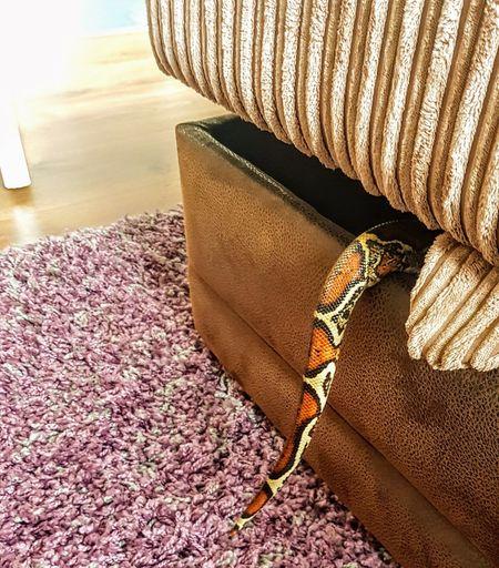 Snake Animal