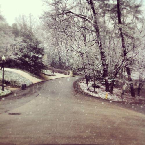 -The Snow