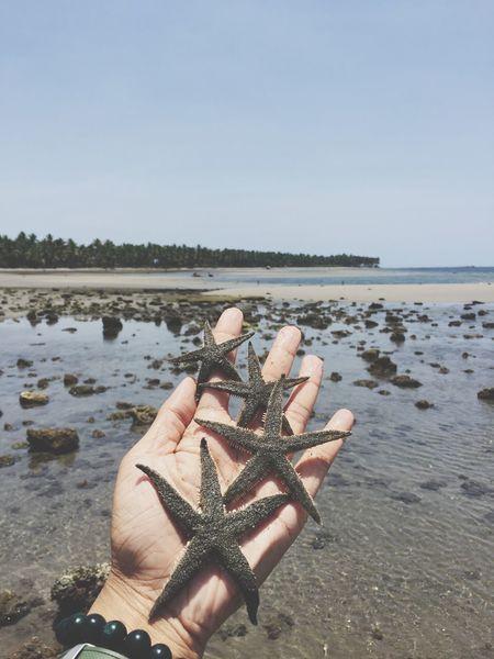 Summer Starfish  Beach Gray Hand Sea