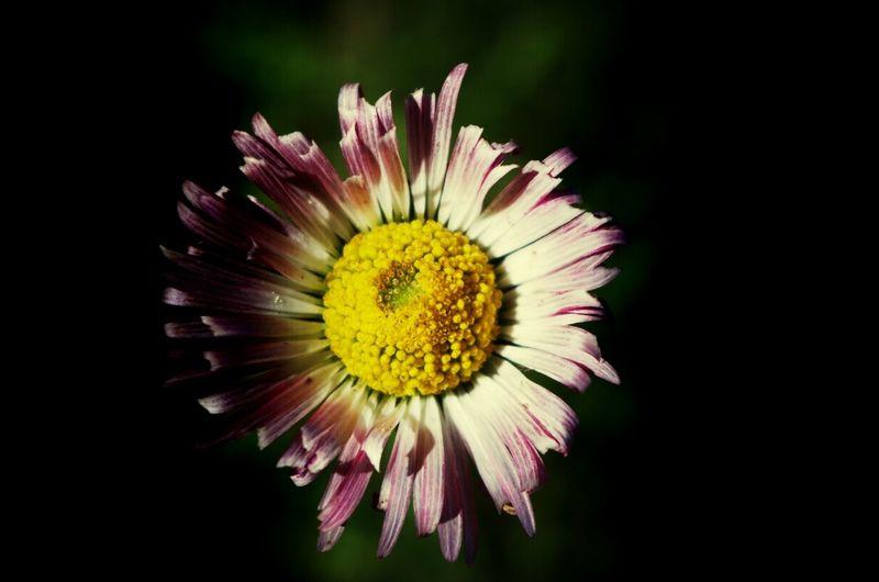 Relaxing Enjoying Life Dreams Paysage flowers