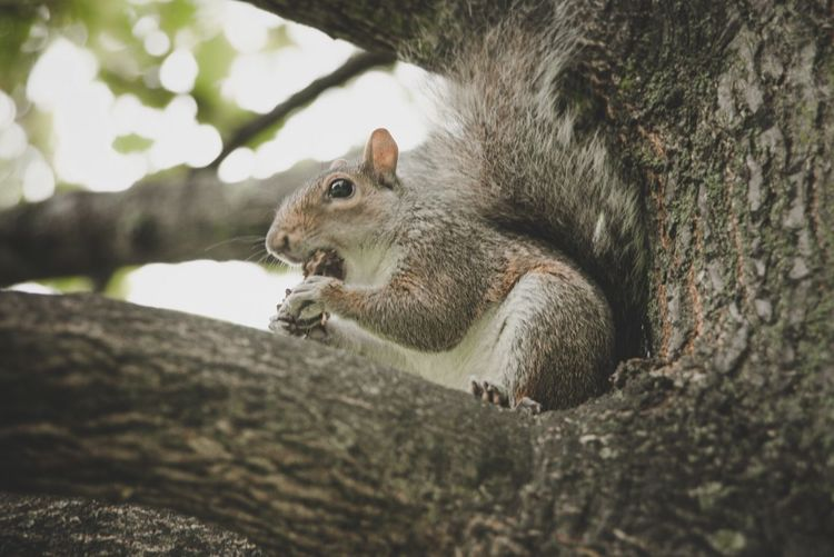 Low Angle View Of A Squirrel On Branch