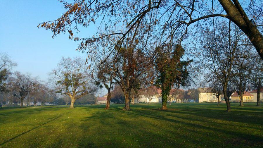 Trees on green landscape against blue sky