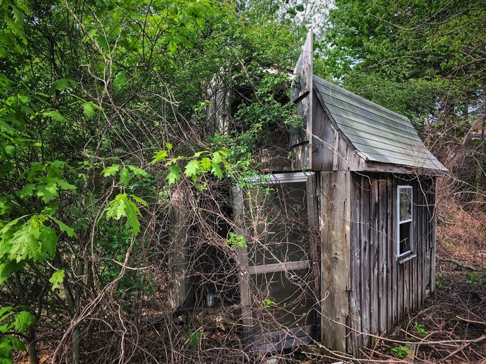 Abandoned & Forgotten Shed in the Wilderness Architecture Built Structure Building Exterior Plant Building No People Day Tree Growth Nature House Green Color Abandoned Outdoors Old Ivy Sunlight Protection Creeper Plant