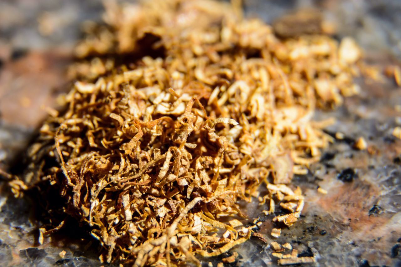 food and drink, close-up, shavings, no people, food, nature, day, outdoors, freshness