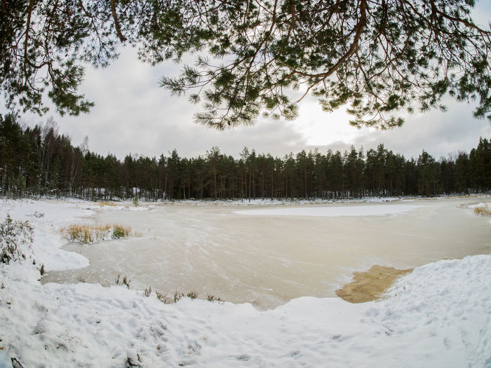 The small lake Måsatjern in Nesodden, Norway after falls first snowfall Beauty In Nature Cold Temperature First Snow Forest Frosen Lake Landscape Måsatjern Nature Nesodden No People Norway Pine Tree Scandinavia Scenics Sky Snow Winter