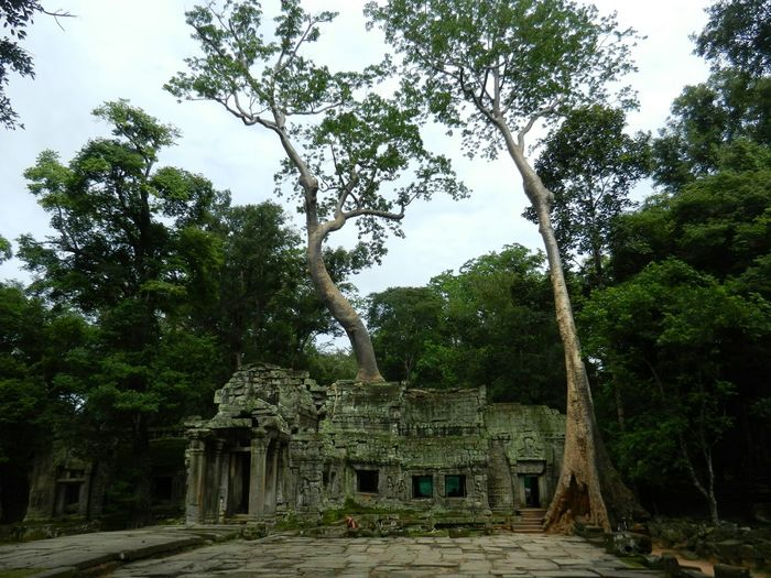 Angkorarcheologicalpark Angkor Siem Reap ASIA Wilderness Ruins Temple Cambodia Tranquil Scene Bagpacking Trip Scenics Exploring Forest Rainforest Beauty In Nature Siemreap Outdoors Nature Tree Strangler Fig Historical Building Tranquility Angkor Wat Mystical Atmosphere