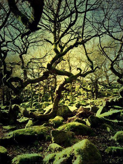 Padley Gorge,