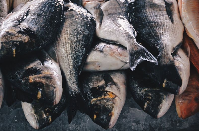 nutrition Work Market Seafood Fish Food And Drink Healthy Eating Food Freshness Raw Food No People Fish Market Indoors  Close-up Day