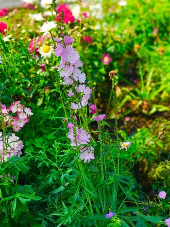Flower Plant Nature Purple Beauty In Nature Growth Focus On Foreground Pink Color Fragility No People Green Color Petal Outdoors Day Freshness Close-up Flower Head Blooming